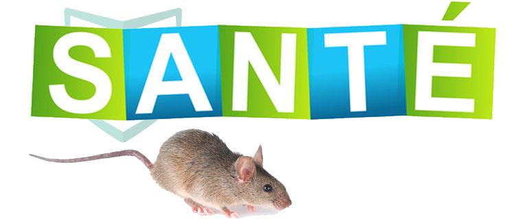 rat santé humaine