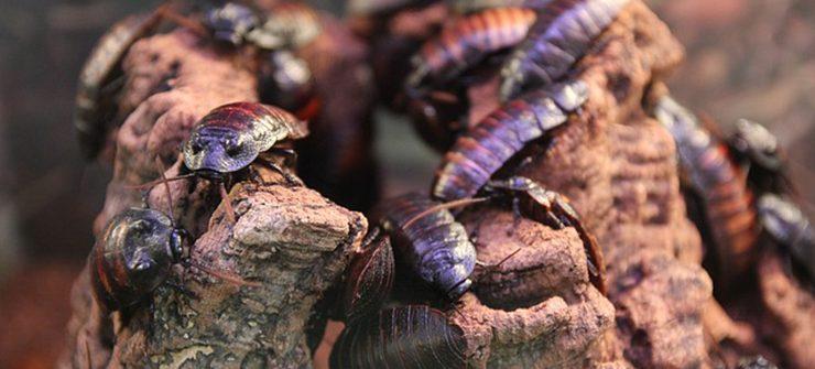 produits contre les blattes