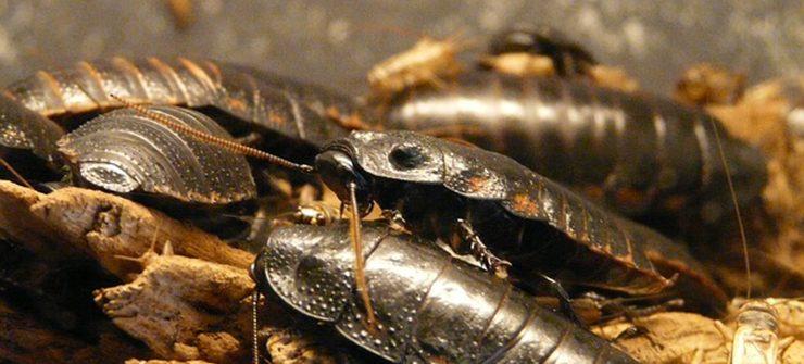 entreprises contre les blattes desinsectisation